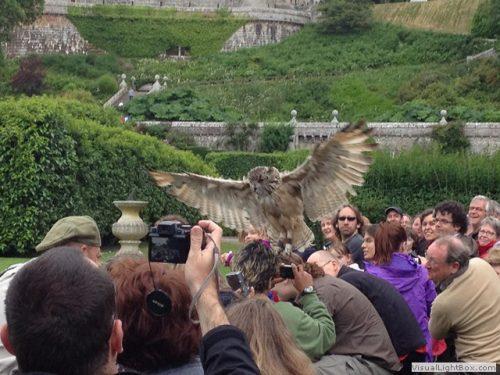 dunrobin castle falconry