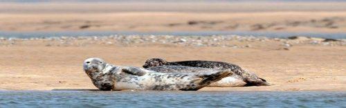 loch fleet seals