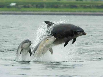 The Black Isle and Dolphins at Chanonry Point